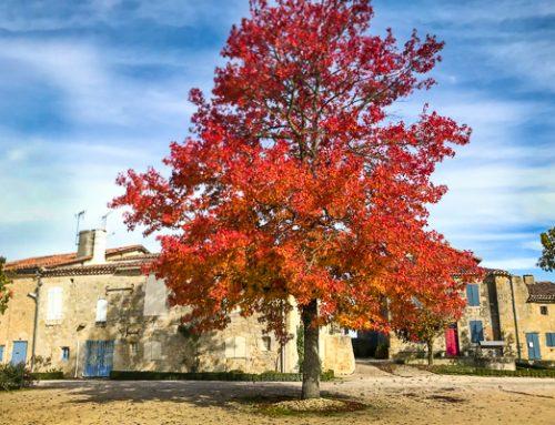Entdecken Sie Gers diesen Herbst